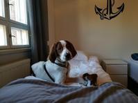 犬と一緒に夫婦小旅行 - Kippis! from Finland