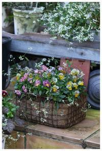 庭に彩りを与える寄せ植え - natu     * 素敵なナチュラルガーデンから~*     福岡で庭造り、外構工事(エクステリア)をしてます