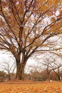 この秋、初めての紅葉 - my FHOTO
