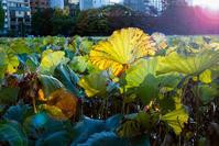 秋の夕日に - 晴の日・雨の日