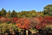 紅葉狩り☆三景園 - できる限り心をこめて・・Ⅲ