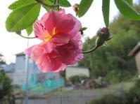 暖かい11月の庭 - 日々の宝物