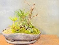 12月の植物ワークショップご案内 - Kitowaの日々