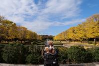 昭和記念公園紅葉 - *Toypoodle  x3 + Birds*