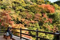 秋の紅葉と滝 - 一瞬の感動を求めて(Photoblog)