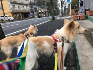 大通りに出てみました。 - 一緒に歩こっ!