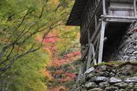 大原の里阿弥陀寺の紅葉 - 絵本だまり