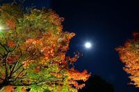 奥日光夜景2018-11-16更新 - 夕陽に魅せられて・・・