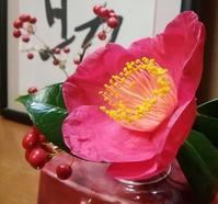 紅妙蓮寺、赤く咲く… - 侘助つれづれ