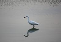 今日の鳥さん181108 - 万願寺通信