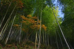 小さい秋 - バンジーノのフォトDE自然日記