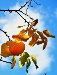 今日の黄葉と紅葉(笑) - のーんびり hachisu 日記