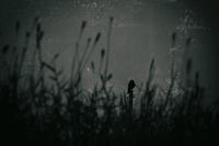 ☆ 黒羽/crow ☆ - ON ANY SUNDAY 2.............