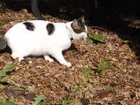 マキューアン『未成年』 - ネコと文学と猫ブンガク
