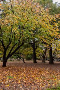 落葉の絨毯 - 彩りの軌跡