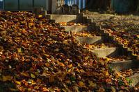 Fallen leaves - デジタルで見ていた風景
