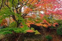 村松公園 - くろちゃんの写真