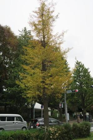 今日?とても素敵な秋晴れでした -