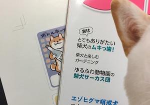 「柴犬さんのツボ」 新刊のお知らせ - アトリエkotori*のほほん柴犬日和