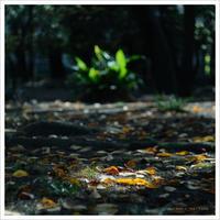 autumn  。°* - かめらと一緒*