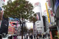11月14日㈬の109前交差点 - でじたる渋谷NEWS