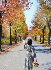 紅葉の並木道 - nico☆nicoな暮らし~絵付けと花とおやつ