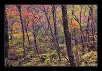 雑木林の紅葉 - Desire