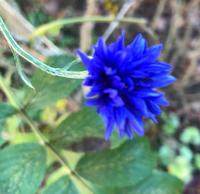 雪が降る前に - Bleu Belle Fleur☆ブルーベルフルール