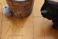 ぶるぶるマウスホロ編 - ぎんネコ☆はうす