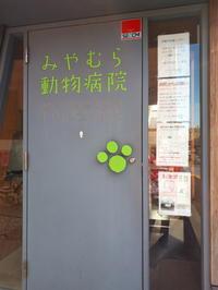 犬のアレルギー治療 - 柴犬 ひろゆきと さもない毎日&週末自宅カフェ里音 (りをん) 一之江・笑い療法士のいるカフェ