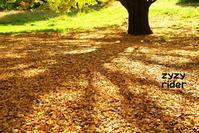 地面に落ちた葉っぱはまだ少し - ジージーライダーの自然彩彩