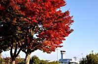 紅葉狩り☆広島空港 - できる限り心をこめて・・Ⅲ