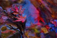 紅葉🍁きれい✨ - ルンコたんとワタシの心模様