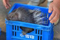 11月16日(金) 無関心 - ほのぼの動物写真日記