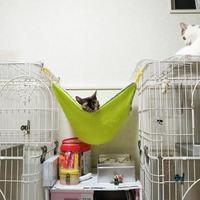 かなでちゃん希望の人からお返事が!   /    あめんぼちゃんとタマちー - ゆきももこの猫夢日記