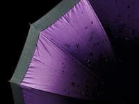 雨暮らし - 1/365 - WEBにしきんBlog