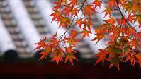 桐生の紅葉名所「崇禅寺」は見頃と言ってもいいかな♪でもちょっと紅が少ないか・・・ - 『私のデジタル写真眼』