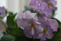 冬花材 - CHIROのお庭しごと