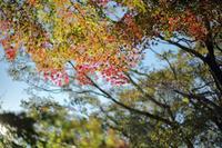 まゝに/11月の散策 六道山 - Maruの/ まゝに