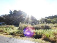 秋の魅力いっぱいです。 - 千葉県いすみ環境と文化のさとセンター