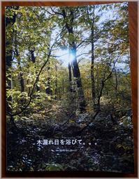 木漏れ日を浴びて。。。 - あれこれ逍遥日記 Vol.2