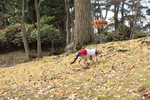 千秋公園の紅葉 -