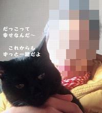 ヌー坊も(*^▽^*) - 八幡地域猫を考える会