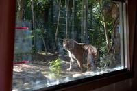独り立ち - 動物園へ行こう
