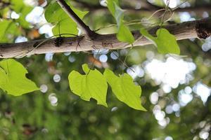 自然からのギフトに - ココ夏日記 ~ 倖せになるためのPhoto&Diary~