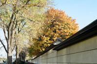 コンクリート土塀と黄葉とあきれた閣僚たち - 照片画廊