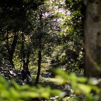 両国散歩旧安田庭園18.10.21 15:11 - スナップ寅さんの「日々是口実」