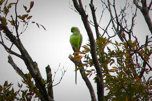 冬鳥が多くなってきた忠生公園 -