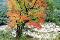銚子川の紅葉 - みちはた写真館フォトギャラリー