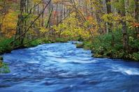 紅葉の奥入瀬渓流-5 - 自然と仲良くなれたらいいな2